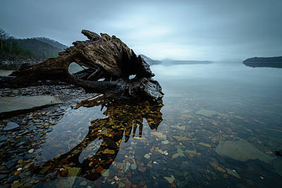 Photograph - Driftwood by Michael Scott