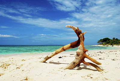 Photograph - Driftwood by Monique Taree