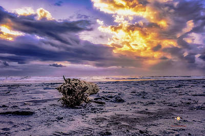 Photograph - Driftwood Morning by Joedes Photography