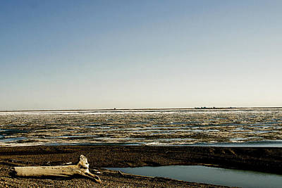 Photograph - Driftwood On Arctic Beach by Anthony Jones