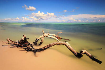 Tropical Photograph - Driftwood On Bahia Honda Beach by Stefan Mazzola