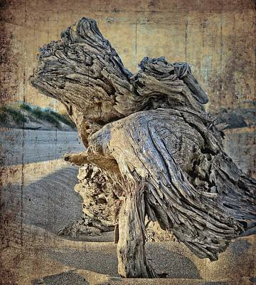 Photograph - Bandon Driftwood  by Thom Zehrfeld