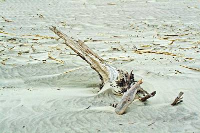 Photograph - Driftwood On Beach by Bill Barber