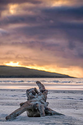 Photograph - Driftwood On Luskentyre, Harris by Neil Alexander