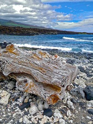 Photograph - Driftwood On Maui by Waterdancer