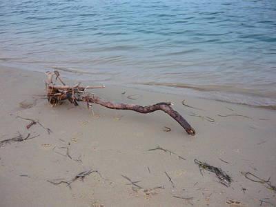 Driftwood On Ocean Beach Art Print by Adrianne Wood