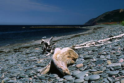 Driftwood On Rocky Beach Art Print by Sally Weigand