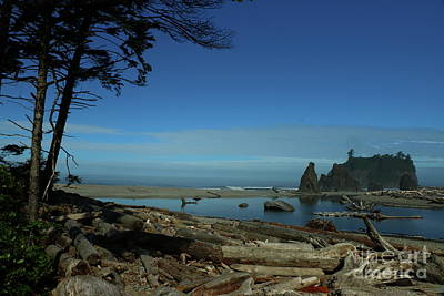 Photograph - Driftwood On Ruby Beach by Christiane Schulze Art And Photography