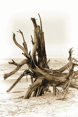Photograph - Driftwood On Sullivan's Island Sepia by Sharon McConnell
