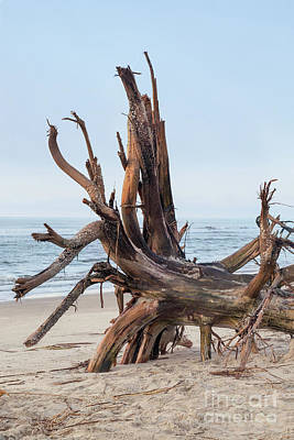 Photograph - Driftwood On Sullivan's Island by Sharon McConnell