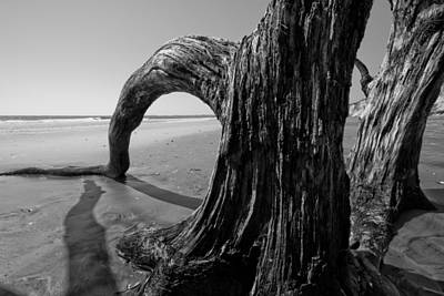 Driftwood On The Beach Art Print by Dustin K Ryan