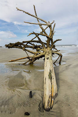 Photograph - Driftwood On The Beach by Fran Gallogly