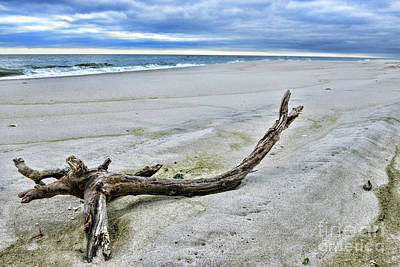 Photograph - Driftwood On The Beach by Paul Ward