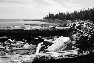 Photograph - Driftwood On The East Side Of Isle Au Haut by Polly Castor