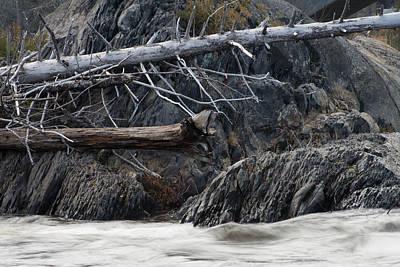 Driftwood On The Rocks Art Print