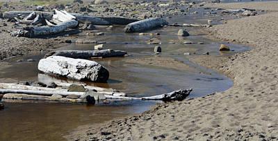 Digital Art - Driftwood Oregon Coast by Janet Duffey