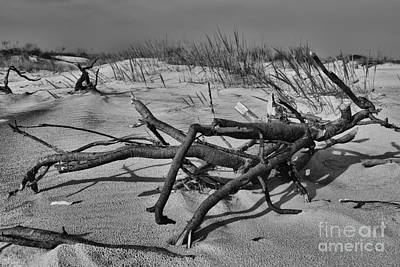 Driftwood Art Print by Paul Ward