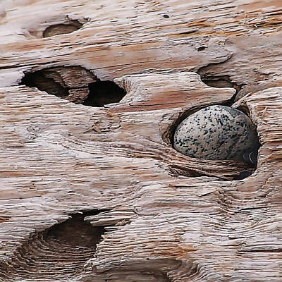 Speckled Granite Photograph - Driftwood Pocket by Art Block Collections