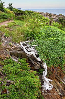 Photograph - Driftwood, Prouts Neck, Scarborough, Maine #30251 by John Bald