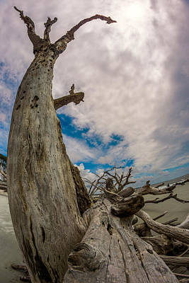 Photograph - Driftwood Reach by Chris Bordeleau