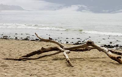 Photograph - Driftwood by Robert Hebert