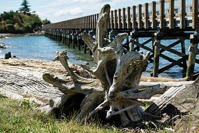 Photograph - Driftwood Root And Trestle Bridge by Tom Cochran
