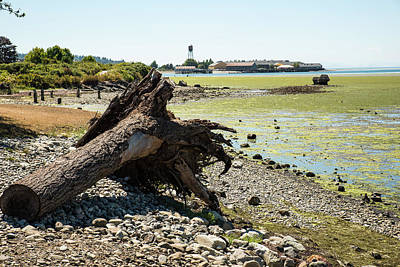Photograph - Driftwood Roots by Tom Cochran
