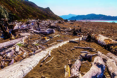 Photograph - Driftwood Shoreline by Garry Gay