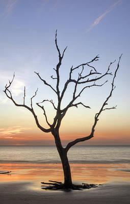 Driftwood Photograph - Driftwood Silhouette by Greg Mimbs