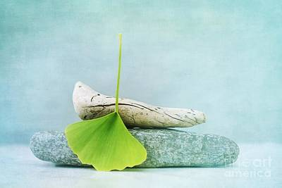 Driftwood Photograph - Driftwood Stones And A Gingko Leaf by Priska Wettstein