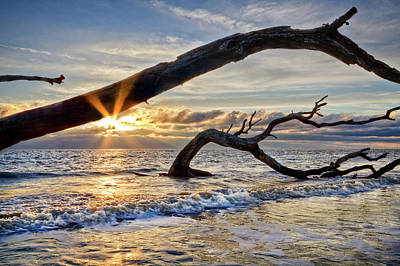 Photograph - Driftwood Sunrise by Debra and Dave Vanderlaan