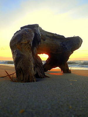 Photograph - Driftwood Sunrise Hatteras Island 7 4/21 by Mark Lemmon