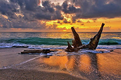 Photograph - Driftwood Sunrise Over Jupiter Florida by Justin Kelefas