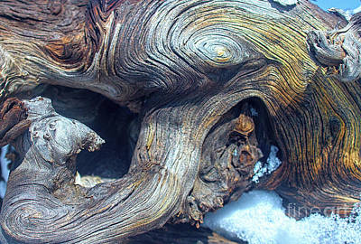 Driftwood Swirls Art Print