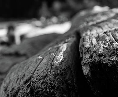 Photograph - Driftwood by Trance Blackman