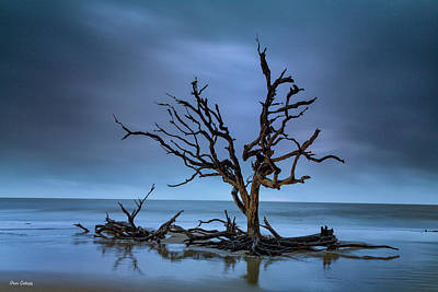 Photograph - Driftwood Tree by Fran Gallogly
