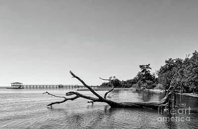 Photograph - Driftwood Tree In Lake - Bw by Kathleen K Parker