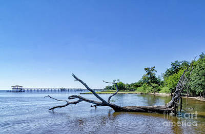 Photograph - Driftwood Tree In Lake by Kathleen K Parker