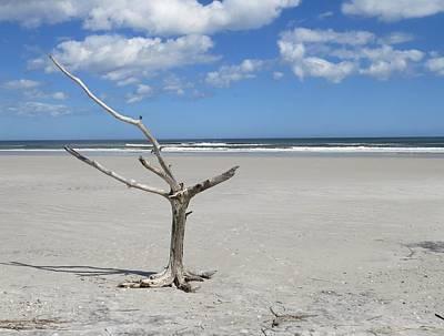 Photograph - Driftwood Tree Standing by Ellen Meakin