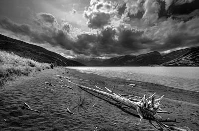 Photograph - Driftwood by Wayne Sherriff