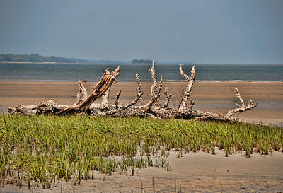 Photograph - Driftwood With Baracles by John Black