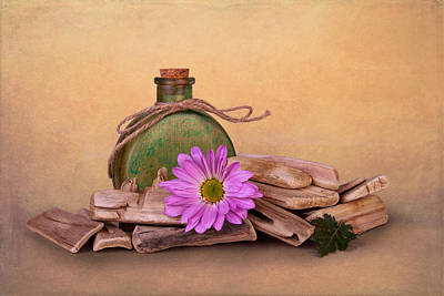 Bottle Photograph - Driftwood With Daisy by Tom Mc Nemar