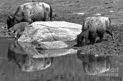 Photograph - Drinking By The Rock Black And White by Adam Jewell