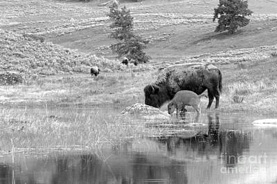 Photograph - Drinking In The Northern Range Black And White by Adam Jewell