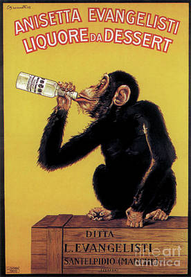 Photograph - Drinking Monkey Poster by Garry McMichael