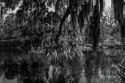 Photograph - Drippin With Spanish Moss At Middleton Place by Dale Powell