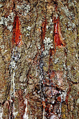 Photograph - Dripping Bark by Debbie Oppermann