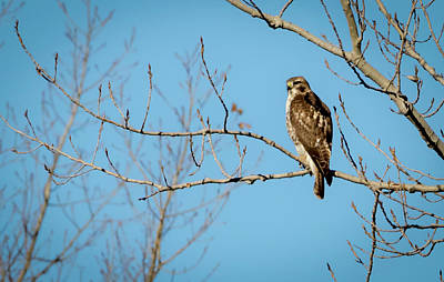 Photograph - Drive By Hawk by Ricky L Jones