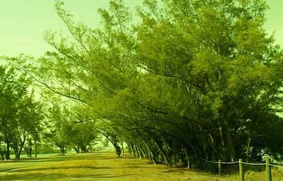 Grace Kelly - Drive Thru Pines by Florene Welebny
