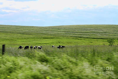 Driveby Shooting No.17 Cows Art Print by Christine Segalas